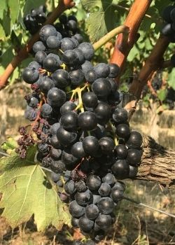 travelimg steps wine